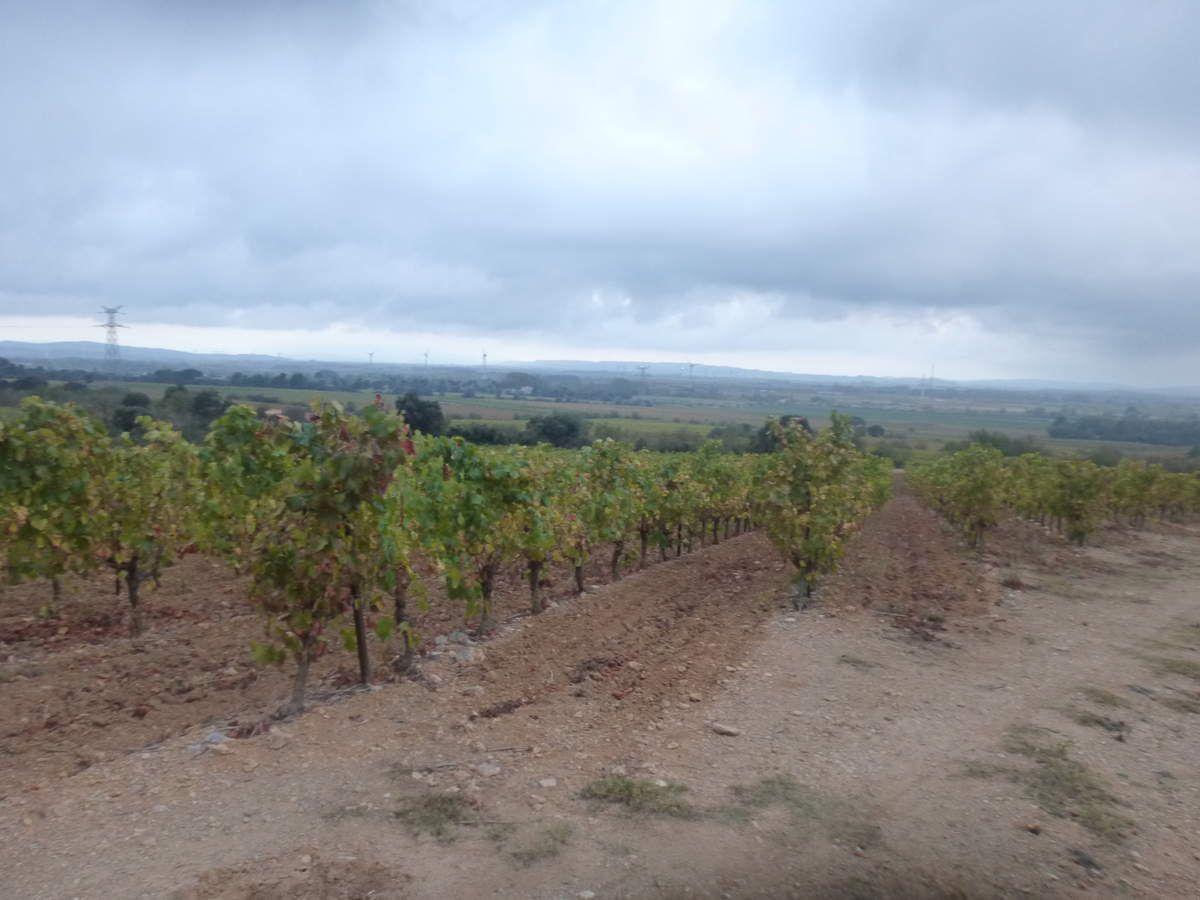 En passant par les lisières de vignes