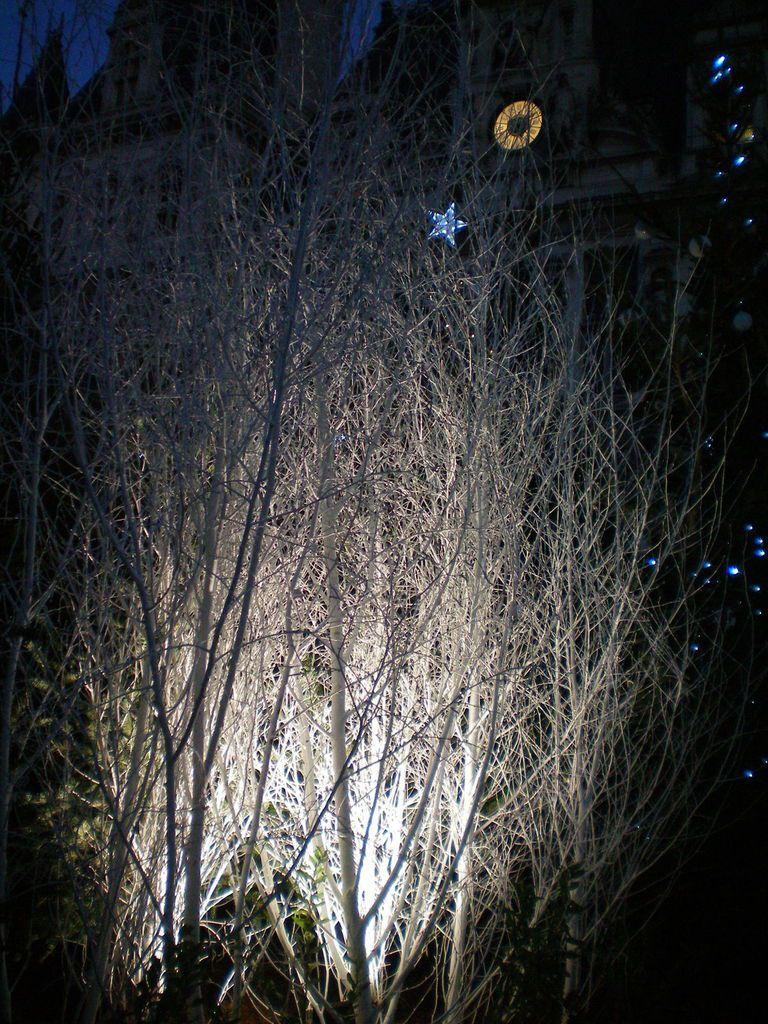 Photo Cendrine... et bientôt les lumières de la Nouvelle Année...