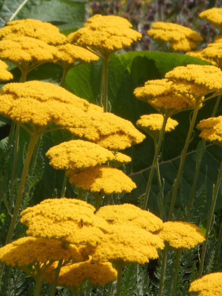 fleurs du jardin botanique bien avant