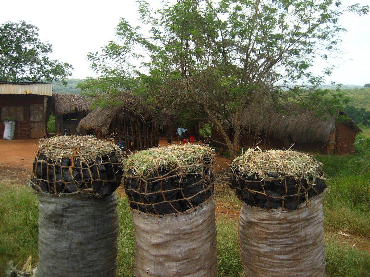 marchands de charbon sur la route de Tanga...