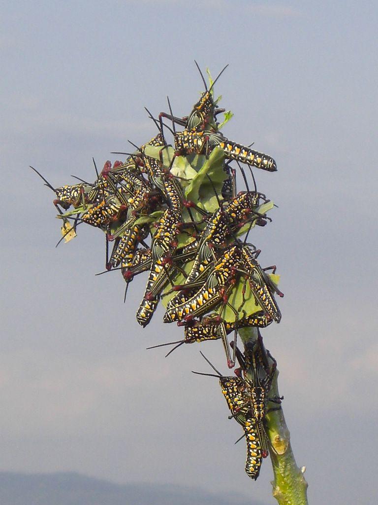 à Moshi, durant ma balade, choquée de voir une attaque pareille. En moins d'une heure la plante (photo au dessus) a été dévorée par ces bêtes...