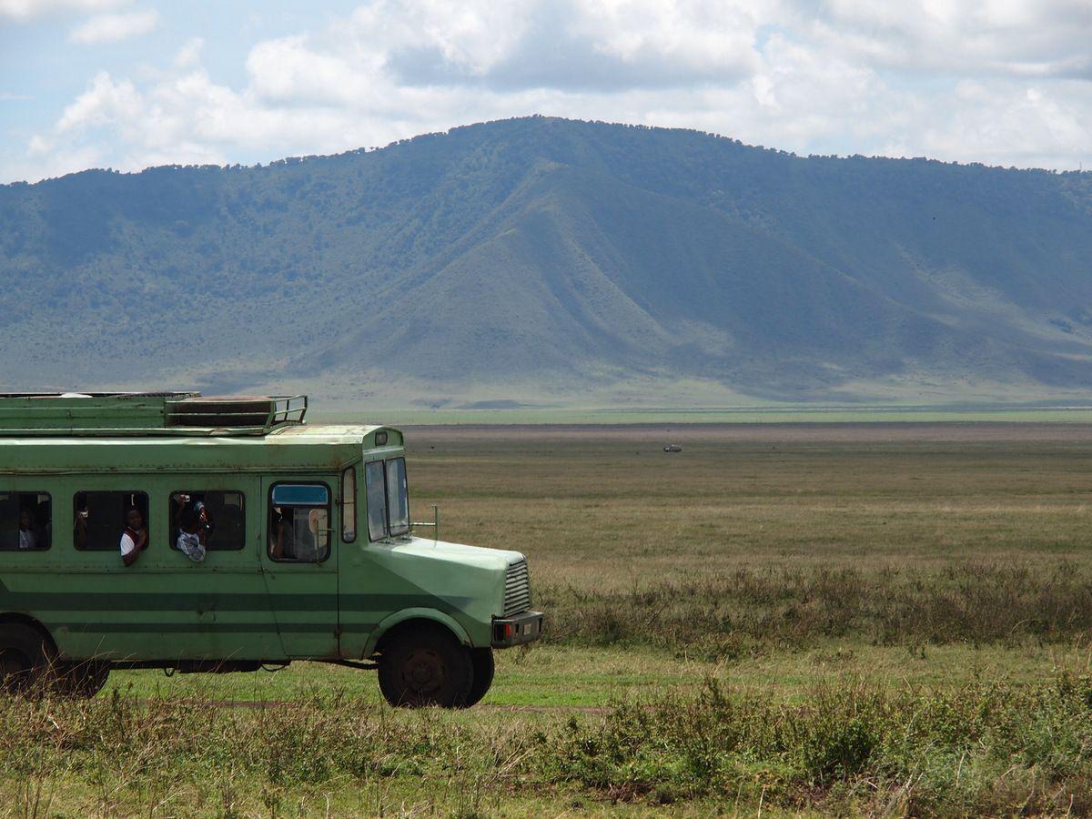 """Safari dans le crater de """"Ngorongoro"""", une sortie scolaire en car dans les vastes d'un parc national; des instants rares,  la maman zèbre en train de mettre au monde sonpetit devant nos yeux....."""