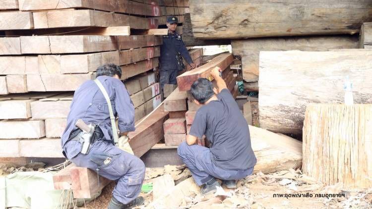 Les fonctionnaires inspectent les grumes et le bois trouvés stockés dans un temple bouddhiste à Kanchanaburi sans les documents d'importation appropriés. Le temple insiste sur le fait que le bois a été introduit légalement dans le pays, mais les enquêteurs en soupçonnent le contraire.