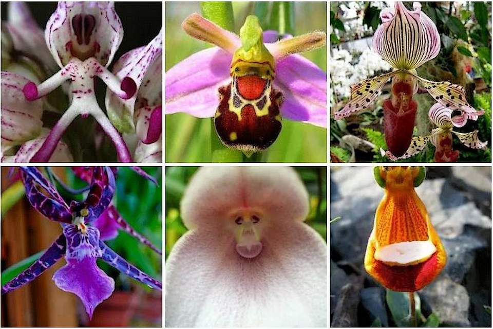 Le monde étrange des orchidées