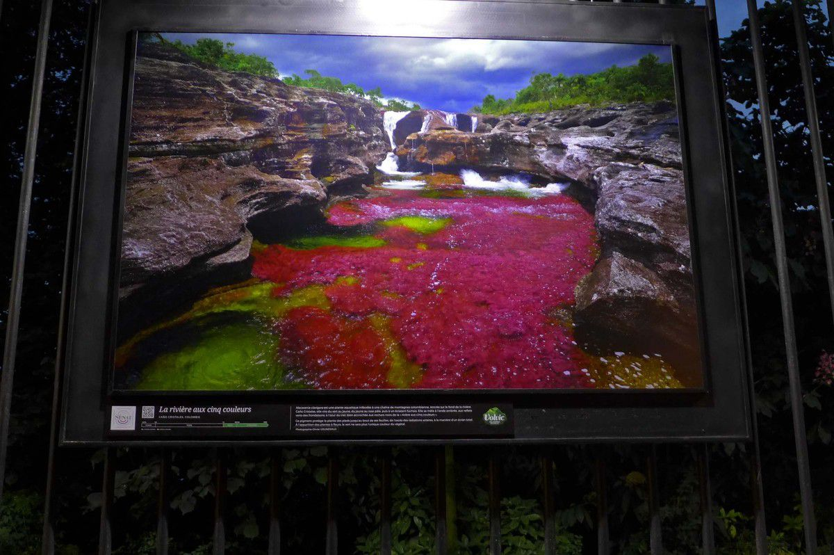 Cano cristales, Colombie