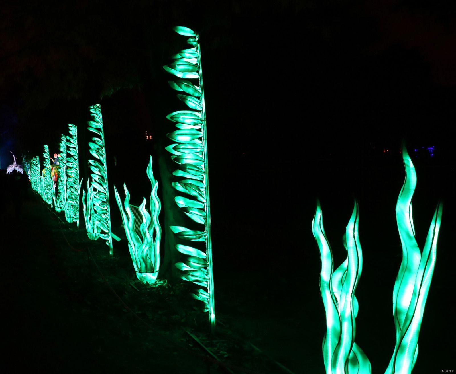 algues laminaires
