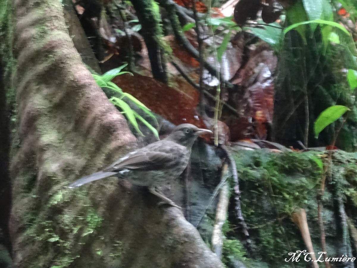 GUADELOUPE COTE TERRE : Randonnée aux chutes de Carbet et la cascade paradise