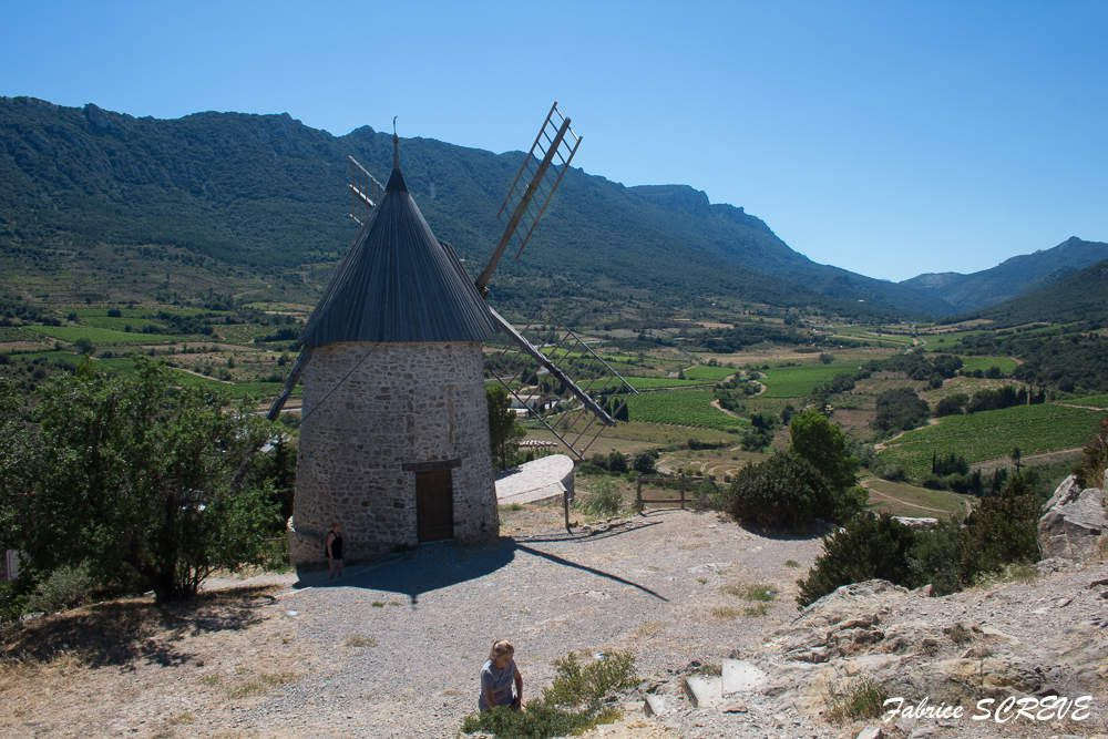 Le moulin d'Omer (Cucugnan)