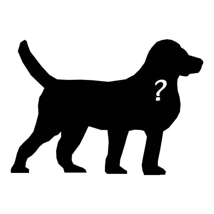 Quel chien peut faire du dog dancing ?