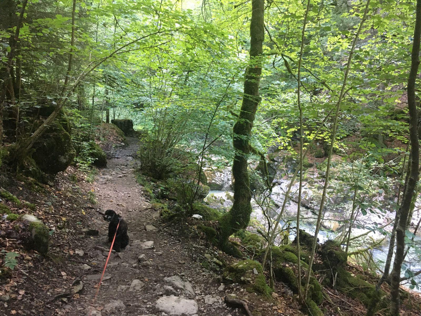 15-16 août 2020 : Les gorges de la Jogne et le lac de Montsalvens / lac de Gruyère (Suisse)