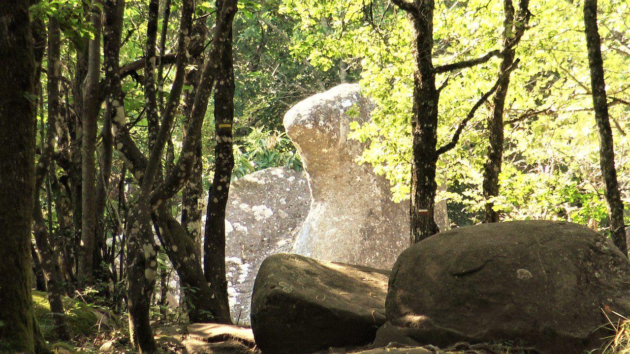 la tête et le bec de l'oie émergents entre les arbres