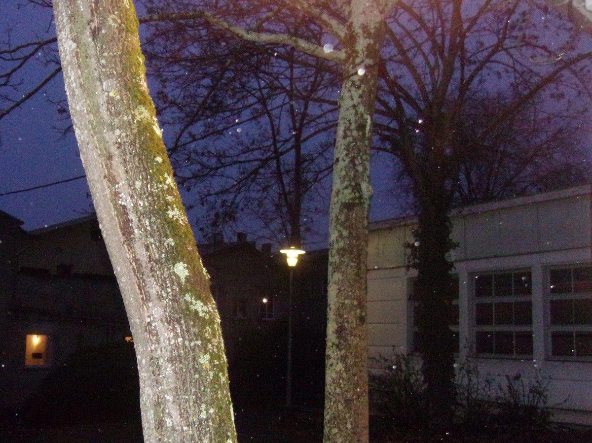 La nuit & la pluie baignent les arbres