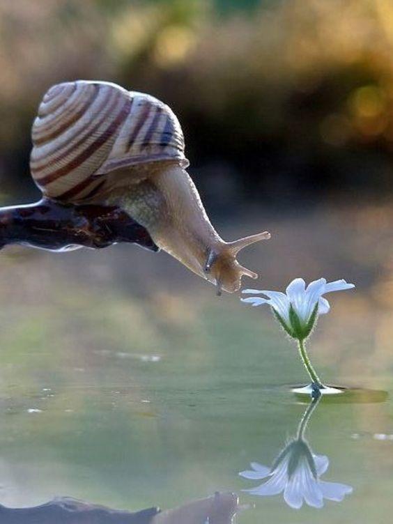 Escargot qui se tend vers une fleur