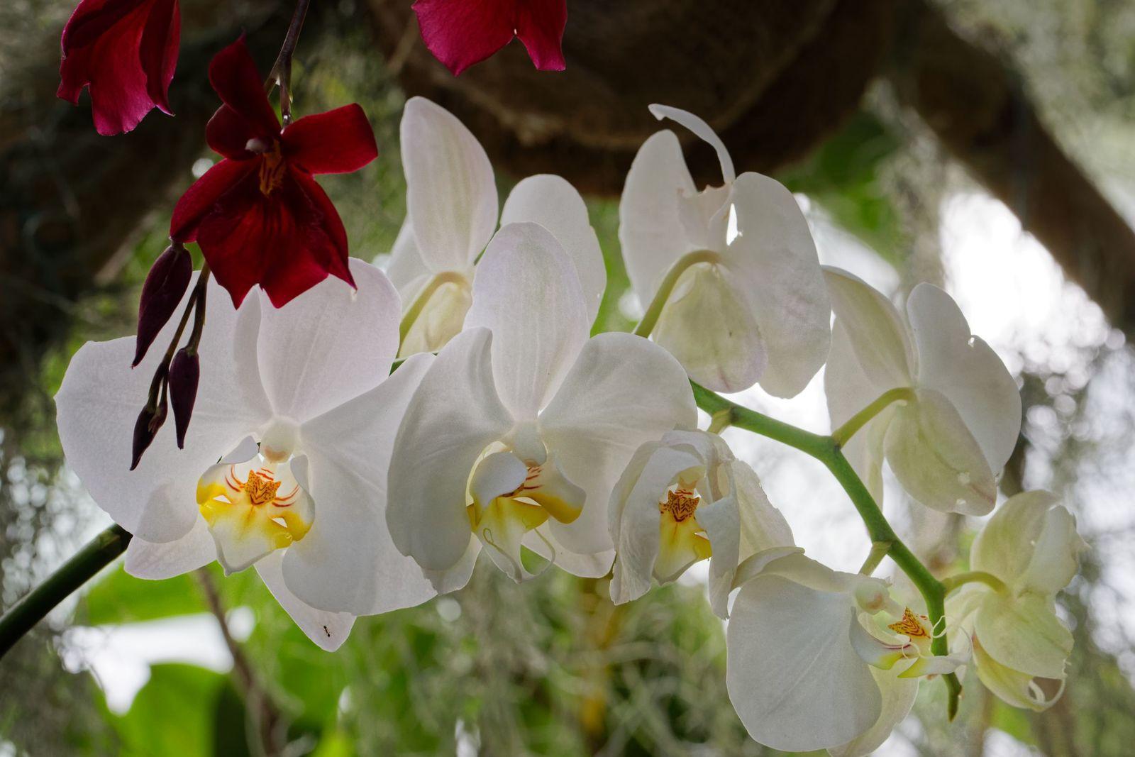 1001 Orchidées au Jardin des Plantes