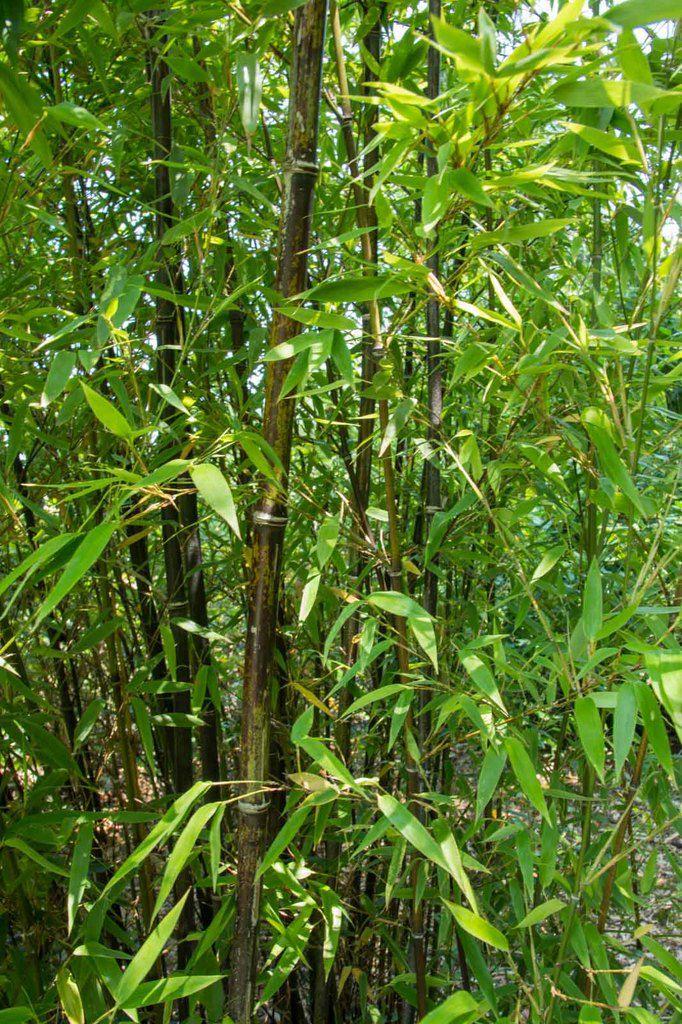 La Bambouseraie de la Tête d'Or