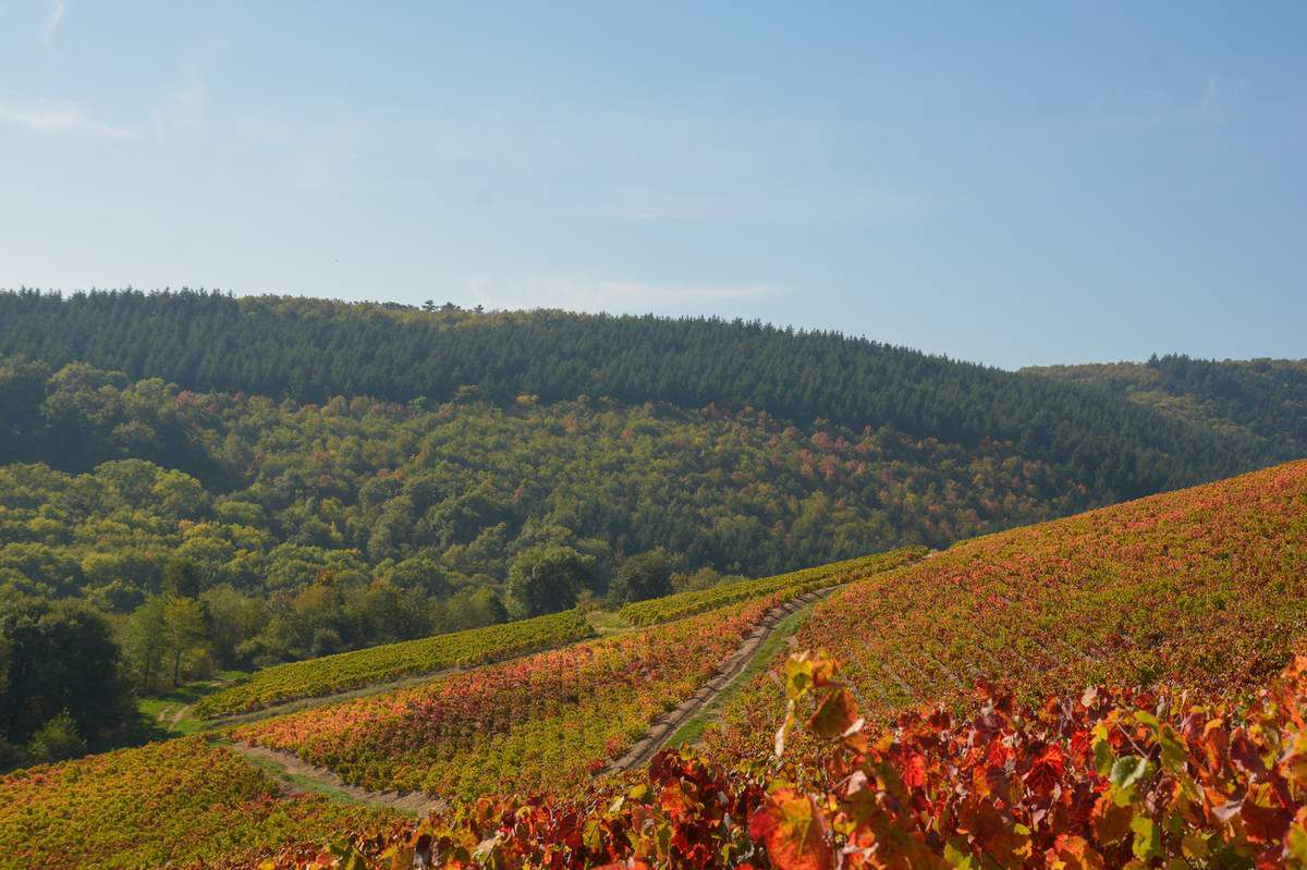 Mont Brouilly - Beaujolais - paysage automnal