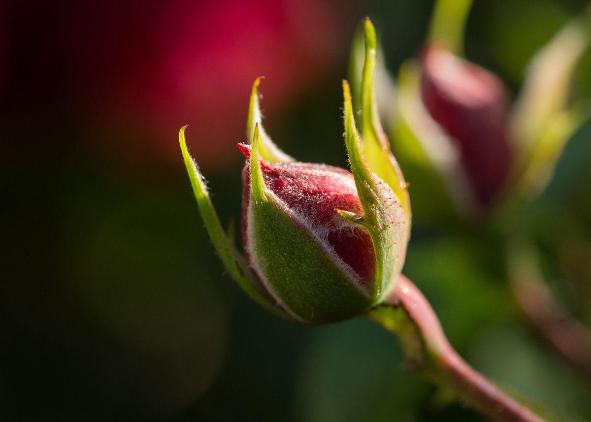Macro et Proxi - Flore