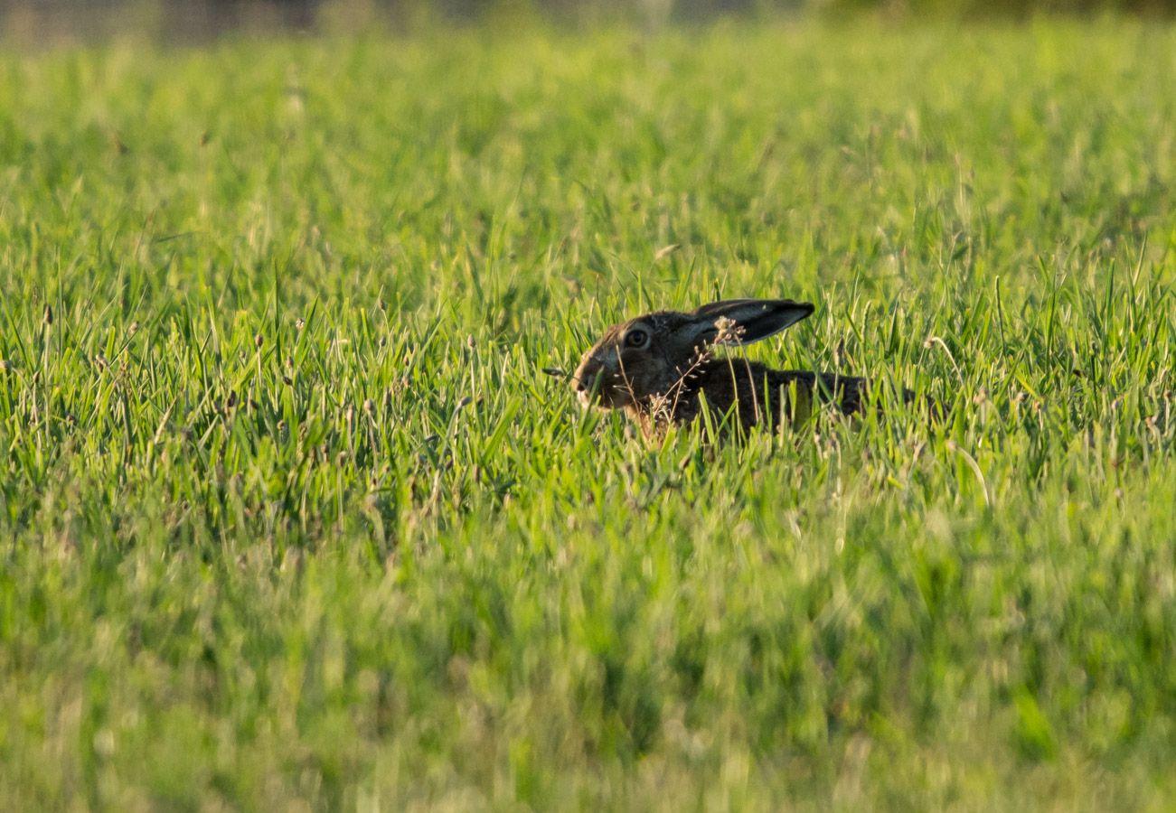 Photo animalière dans nos campagnes lyonnaises