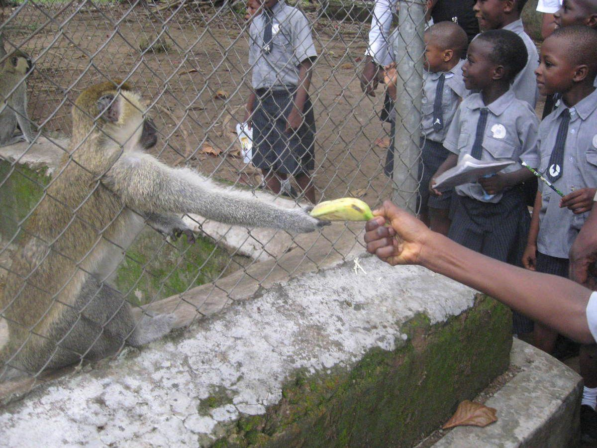 The kids making friends with some animals in the zoo