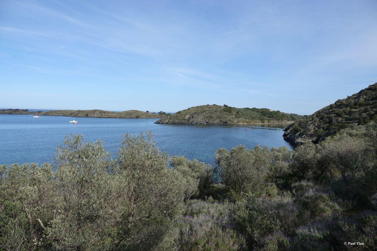 En haut de l'oliveraie, la baie de Portlligat dans toute sa splendeur
