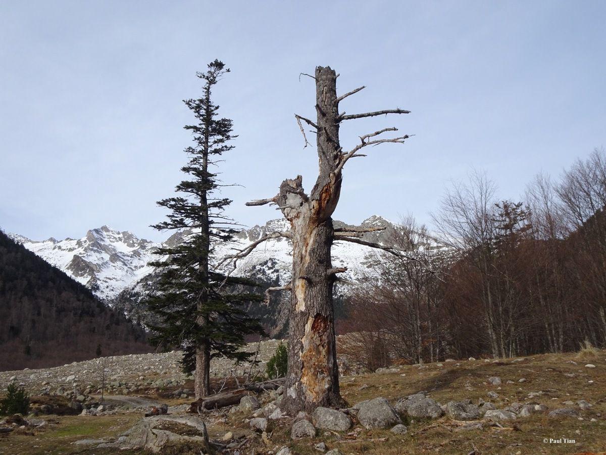 Un jour, une photo : cohabitation... entre deux arbres