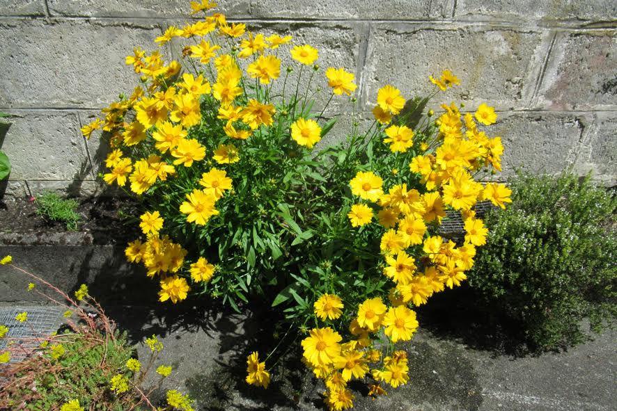 Luchon : des fleurs pour illuminer la journée...