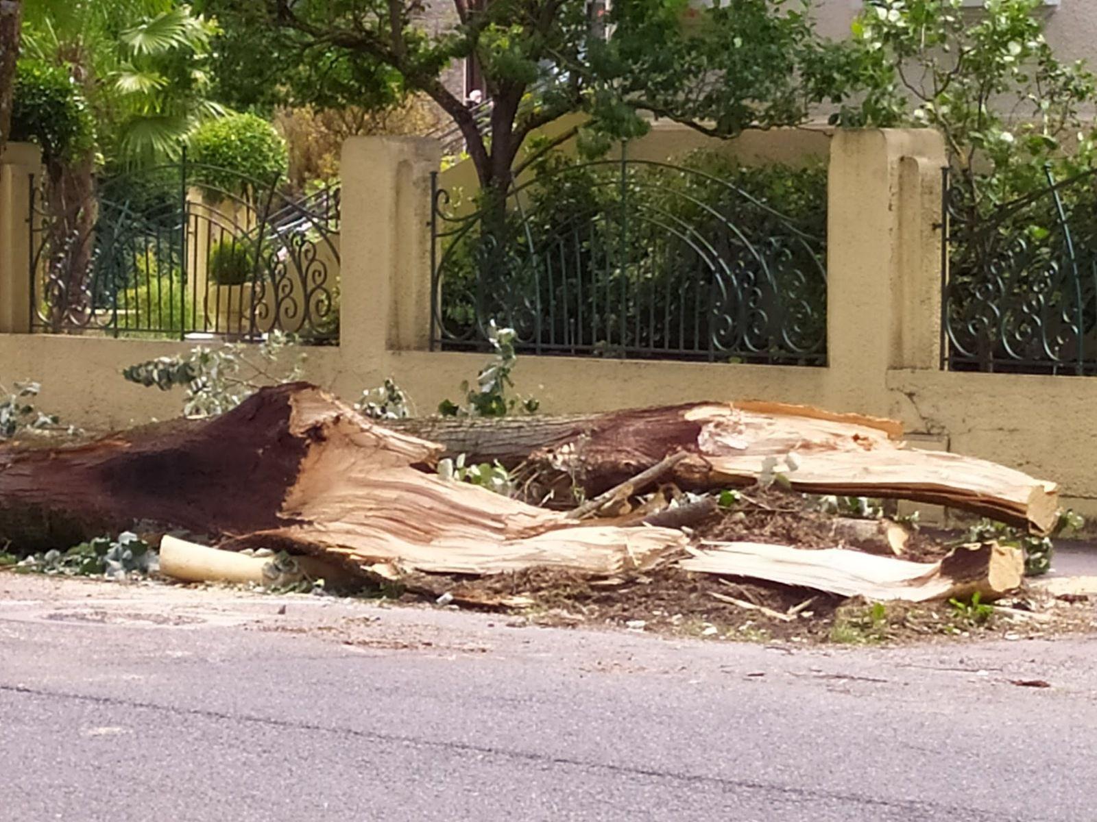 Coup de vent à Luchon : l'impressionnante chute d'un arbre boulevard de Gaulle