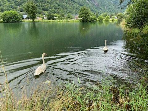Luchon : deux nouveaux résidents au lac de Badech...