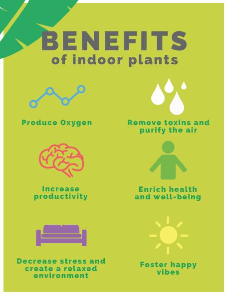 The amazing benefits of houseplants!