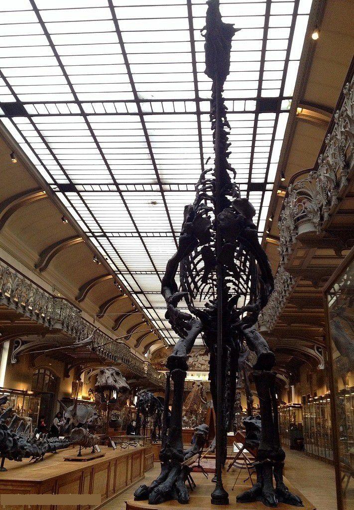 La Galerie de Paléontologie - onlavu