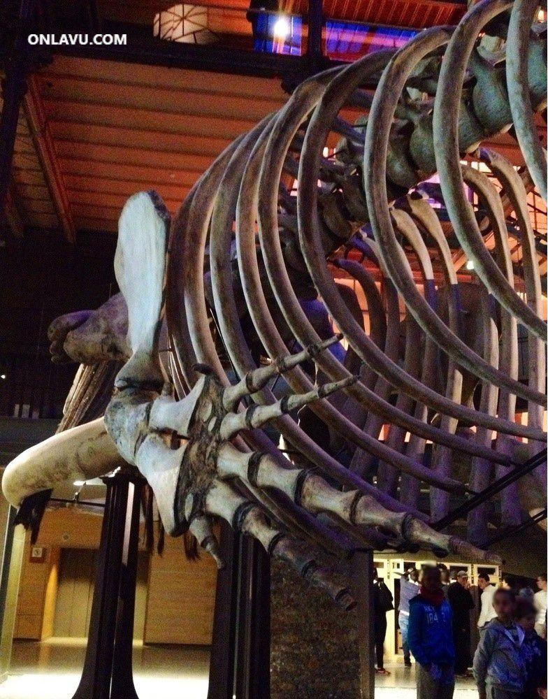 ONLAVU -Grande Galerie de l'Evolution au Muséum d'Histoire Naturelle