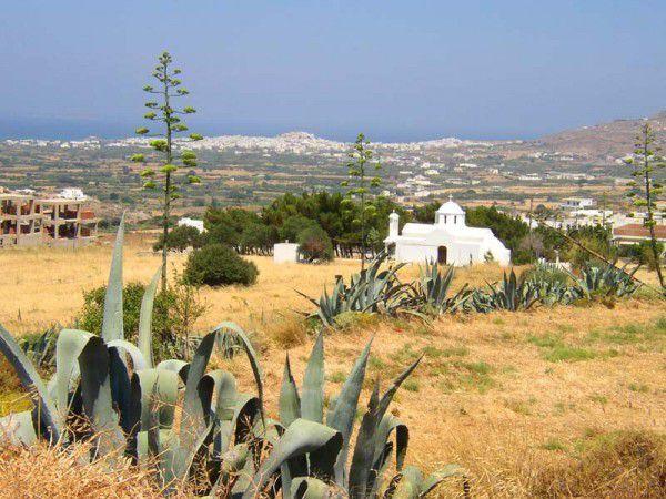 Blick auf Naoussa - Bauer  auf Paros 1976 - fotos jml