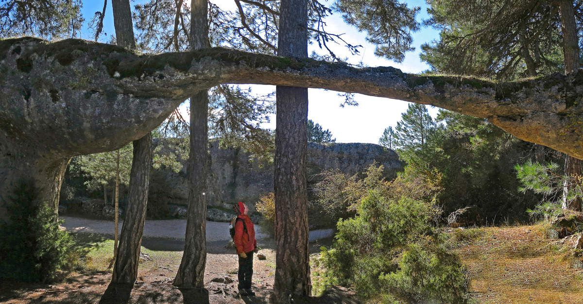 L'arc-boutant du Crocodile de la Ciudad Encatada est plus fin que les troncs d'arbre qui l'entourent !