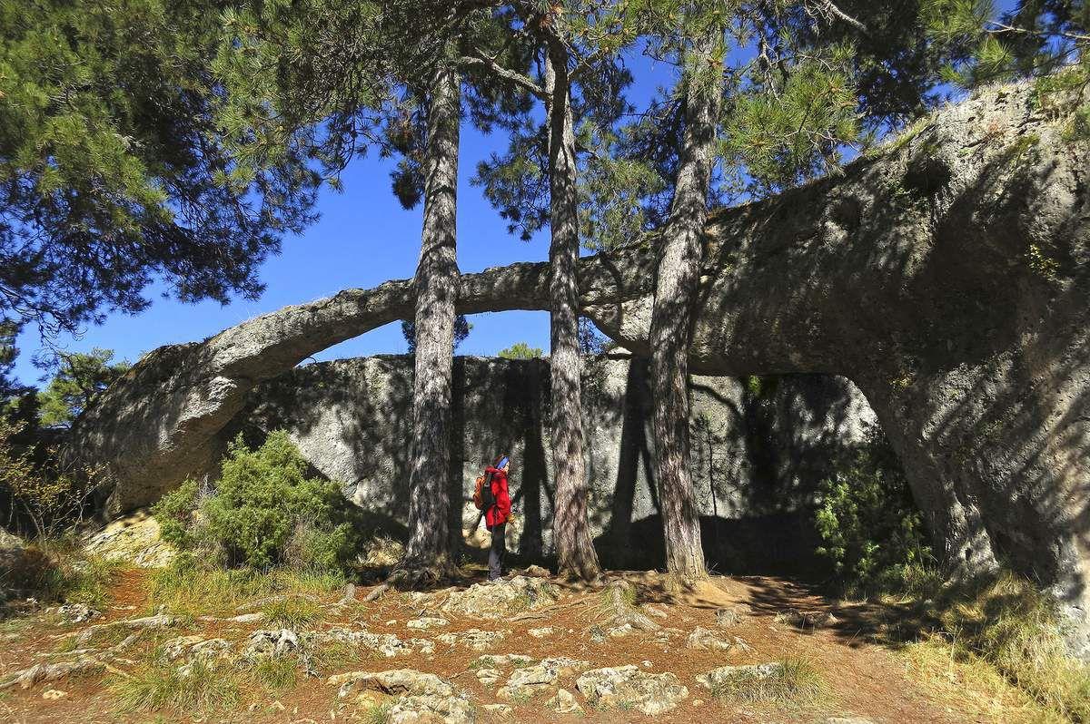 """La formation la plus étonnante est """"l'éléphant et le crocodile"""", un cylindre de pierre suspendu au milieu d'arbres plus épais que lui."""