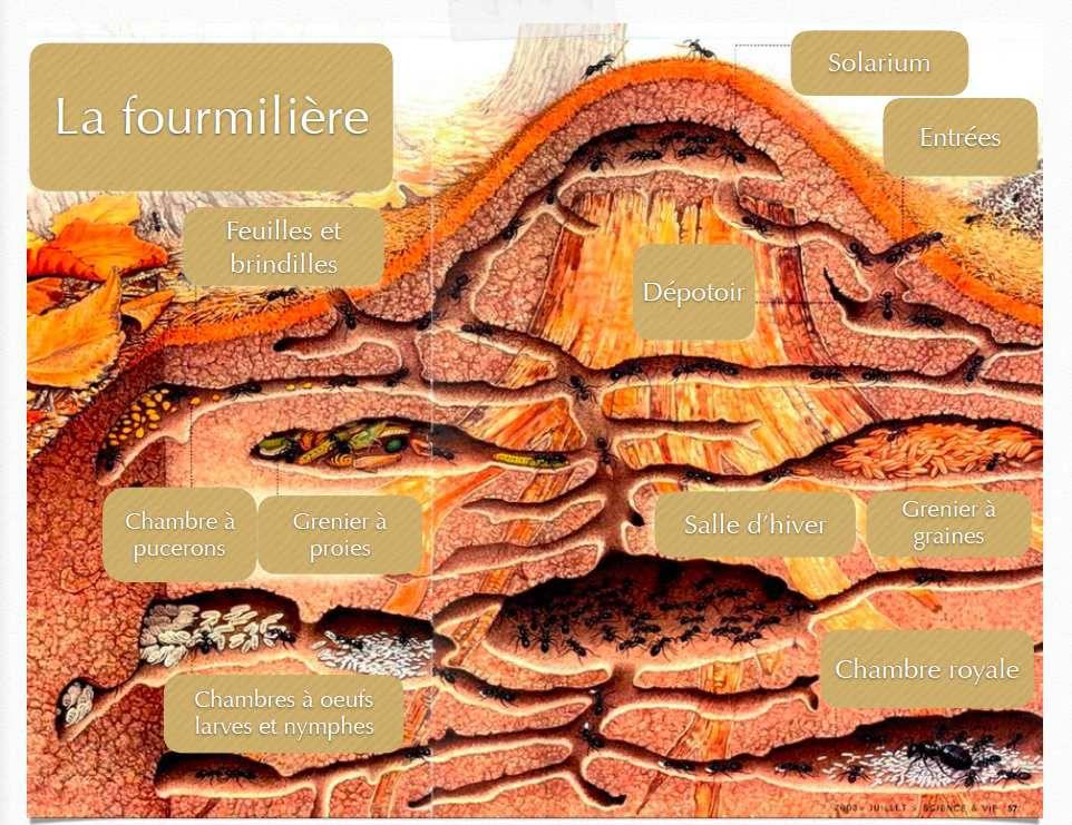 Presentation Des Fourmis La Communication Entre Les Fourmis