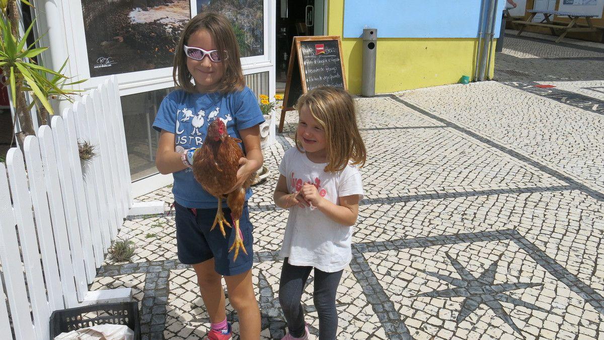 Dernière étape à Sao Jorge où le ferry nous emmène à Velas, jolie capitale où de jeunes navigateurs nous proposent...une poule! Les filles s'imaginent déjà avec une nouvelle copine dans le cockpit mais nous les laisserons avec leur encombrant cadeau.