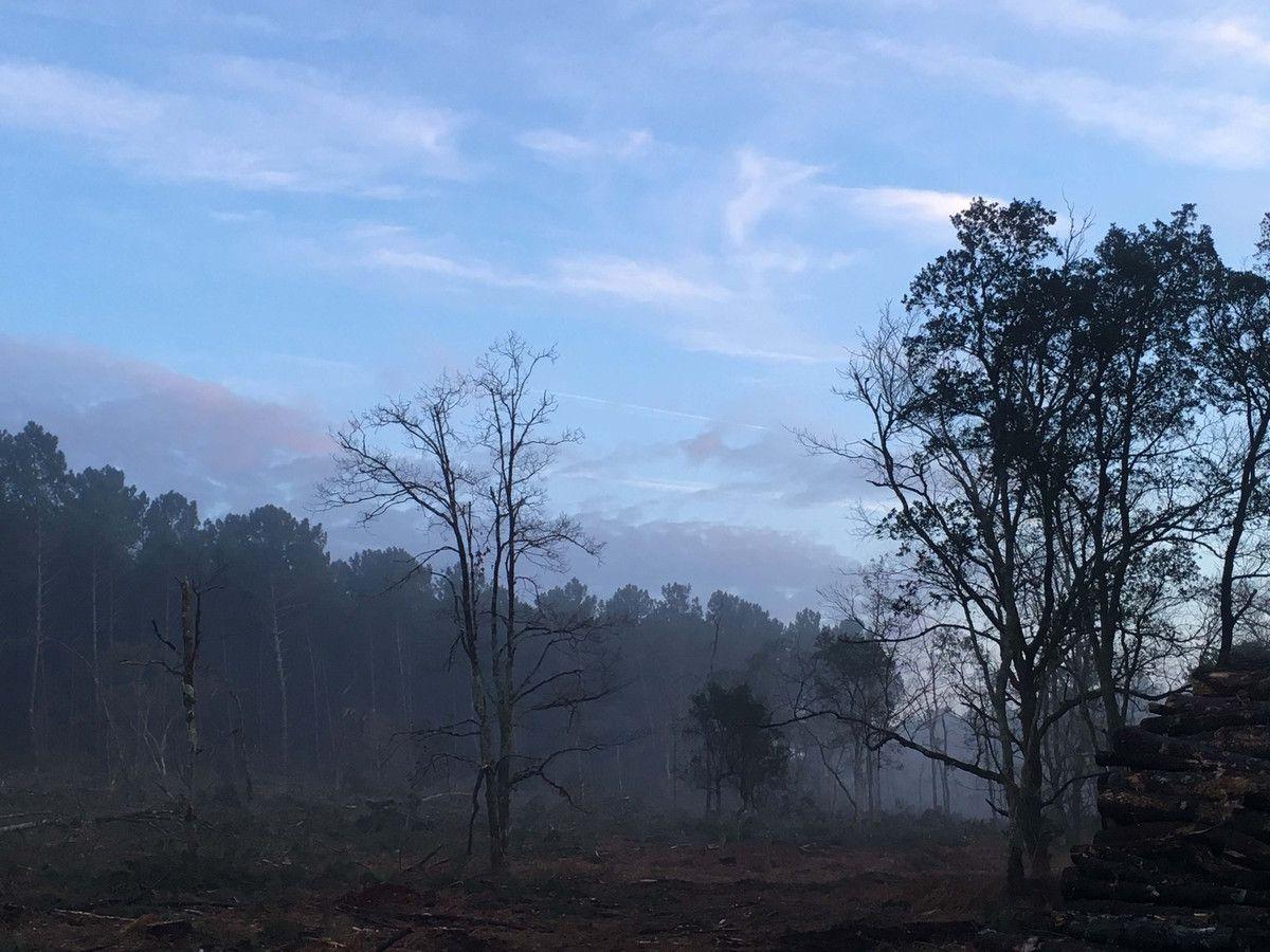 Brume de chaleur en forêt