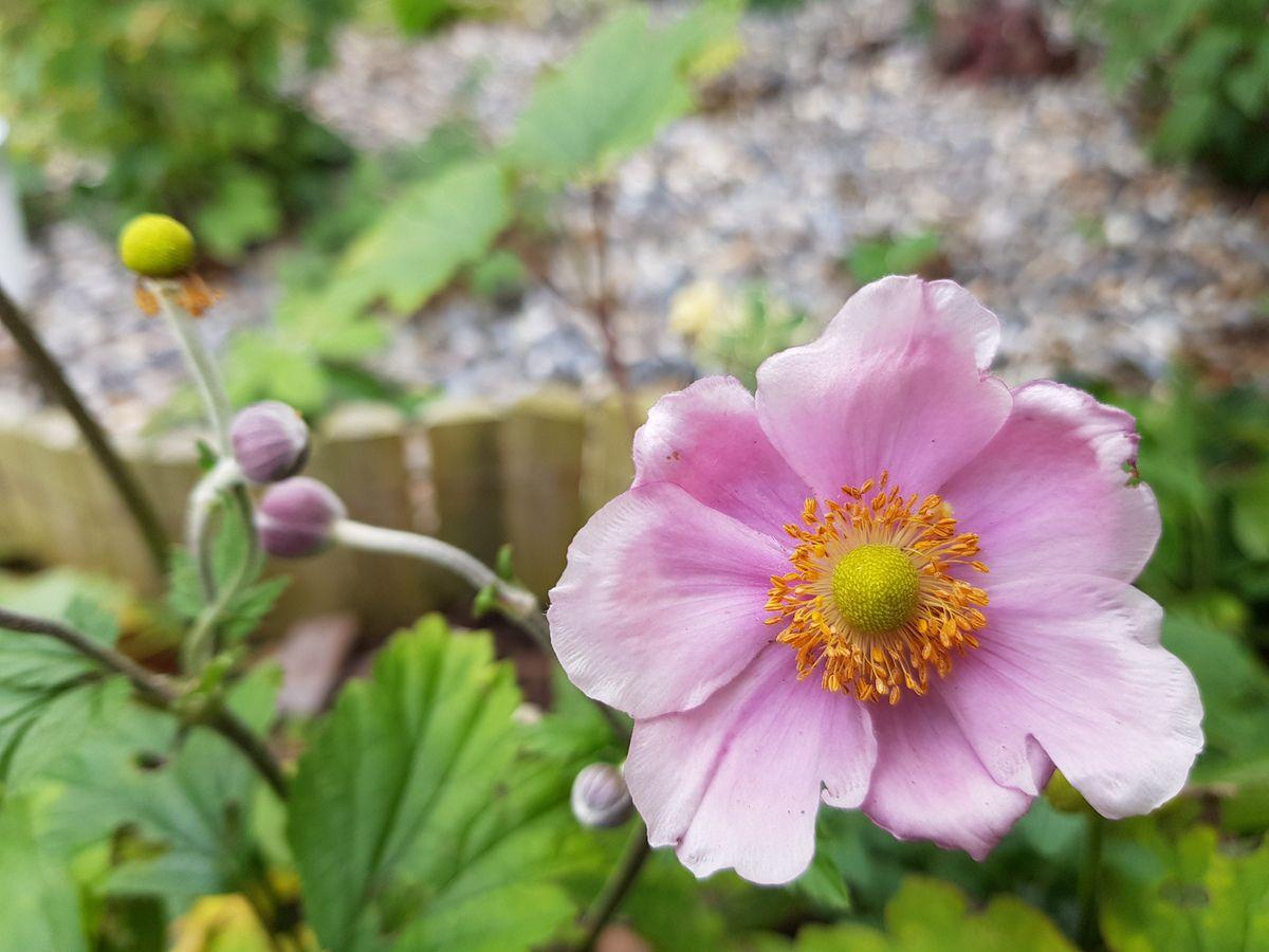 Quelles Fleurs Planter En Septembre fleurs de septembre - au jardin d'istariel