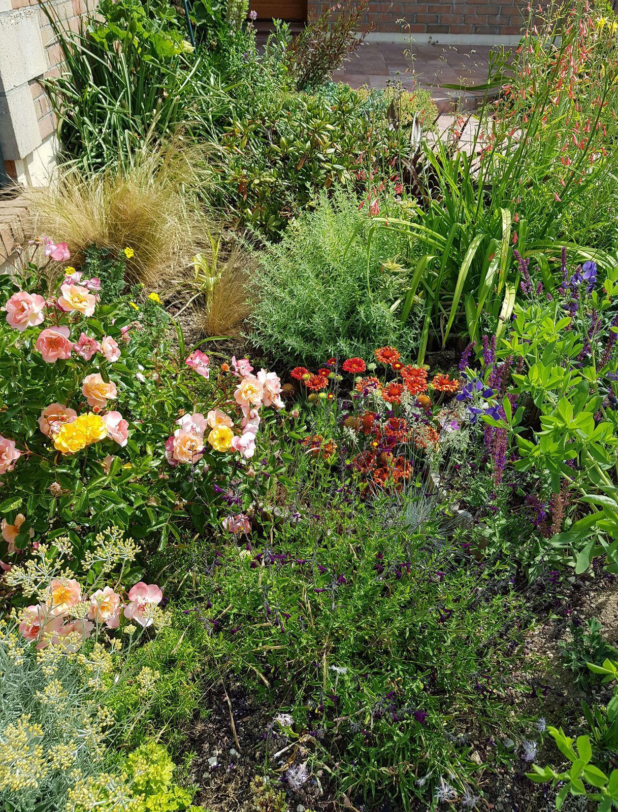 Un jardin sec