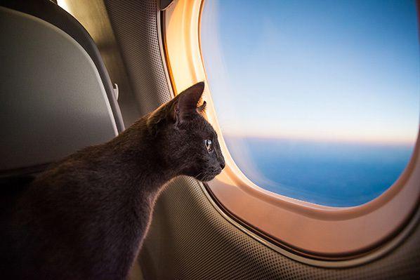 PrivateFly chat à bord d'un jet privé