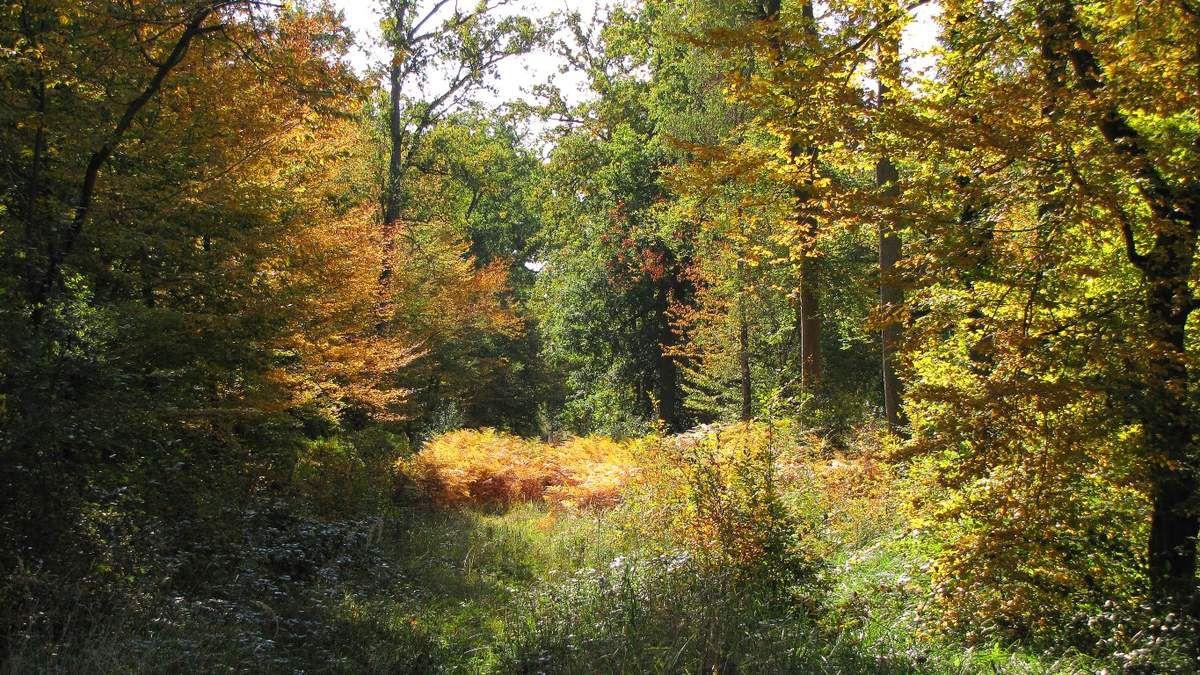 le carrefour de Sainte-Périne en forêt de Compiègne