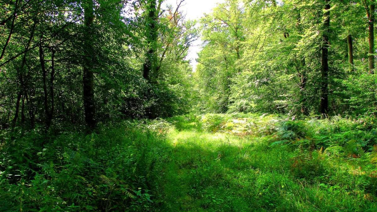 carrefours sans noms en forêt de Compiègne