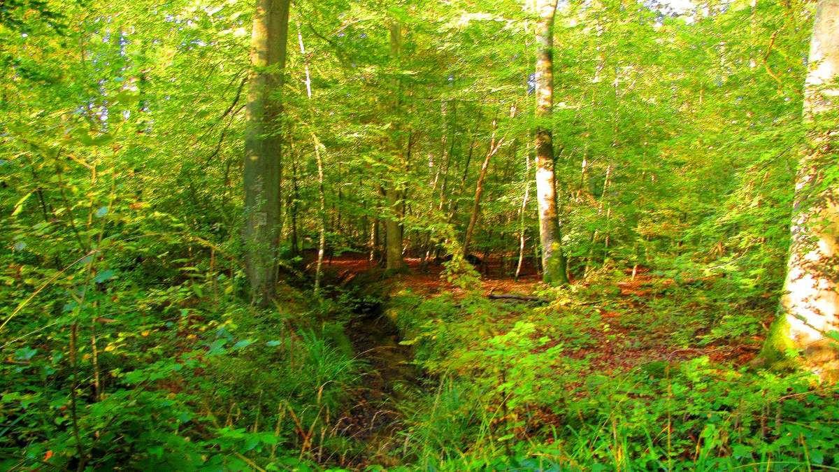 des Rus en forêt de Compiègne