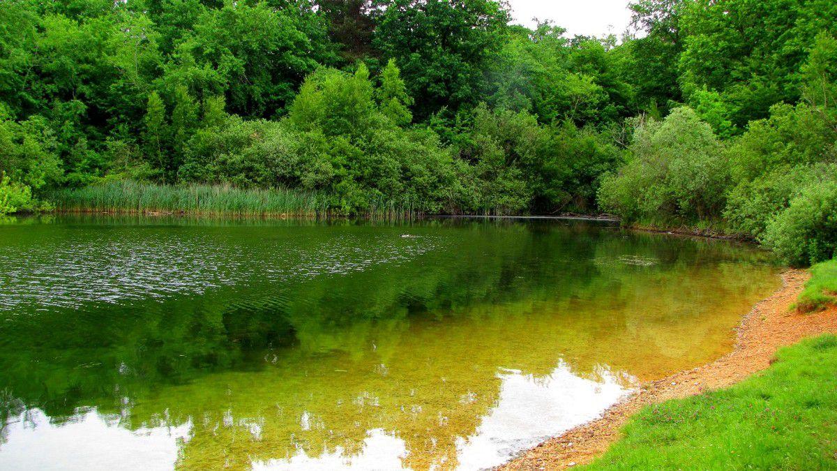 des étangs en forêt de Compiègne