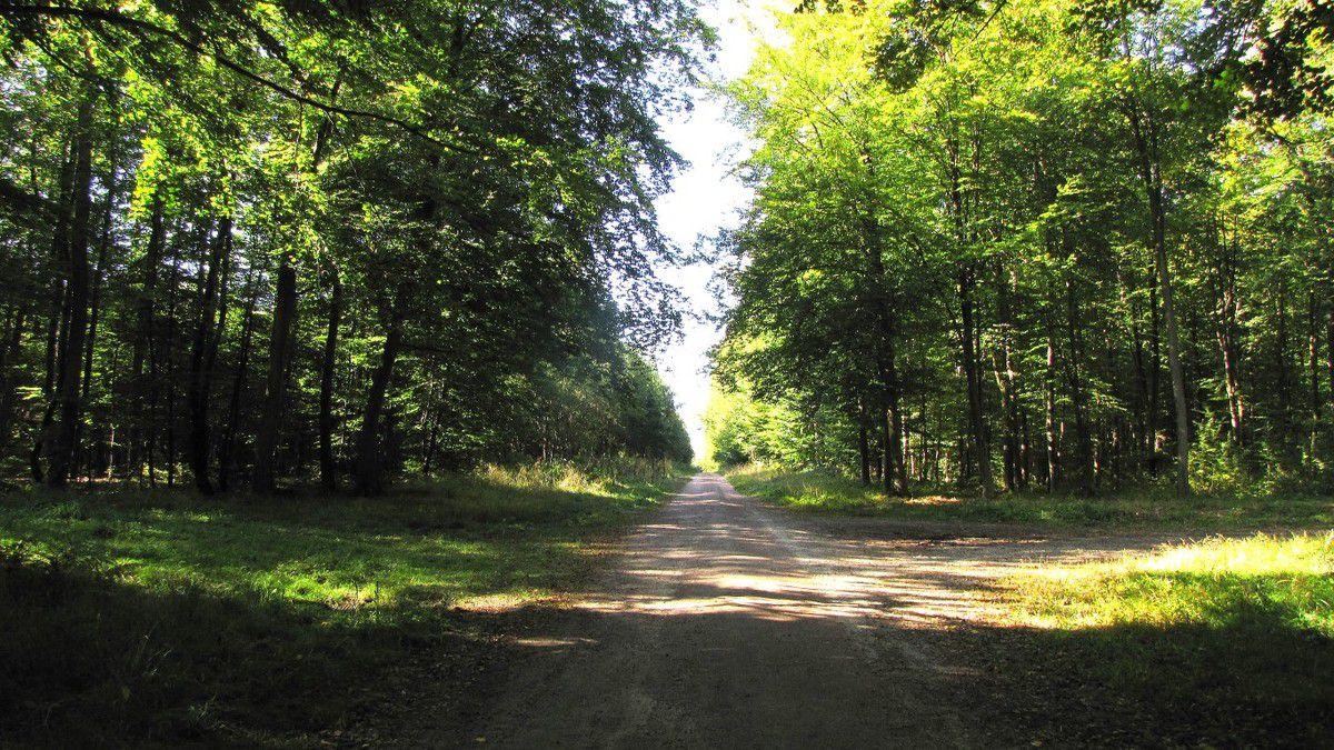 Randonnée en forêt de Compiègne_le Beaudon_bois de Damart_la Héronnière_bois du Bourgot