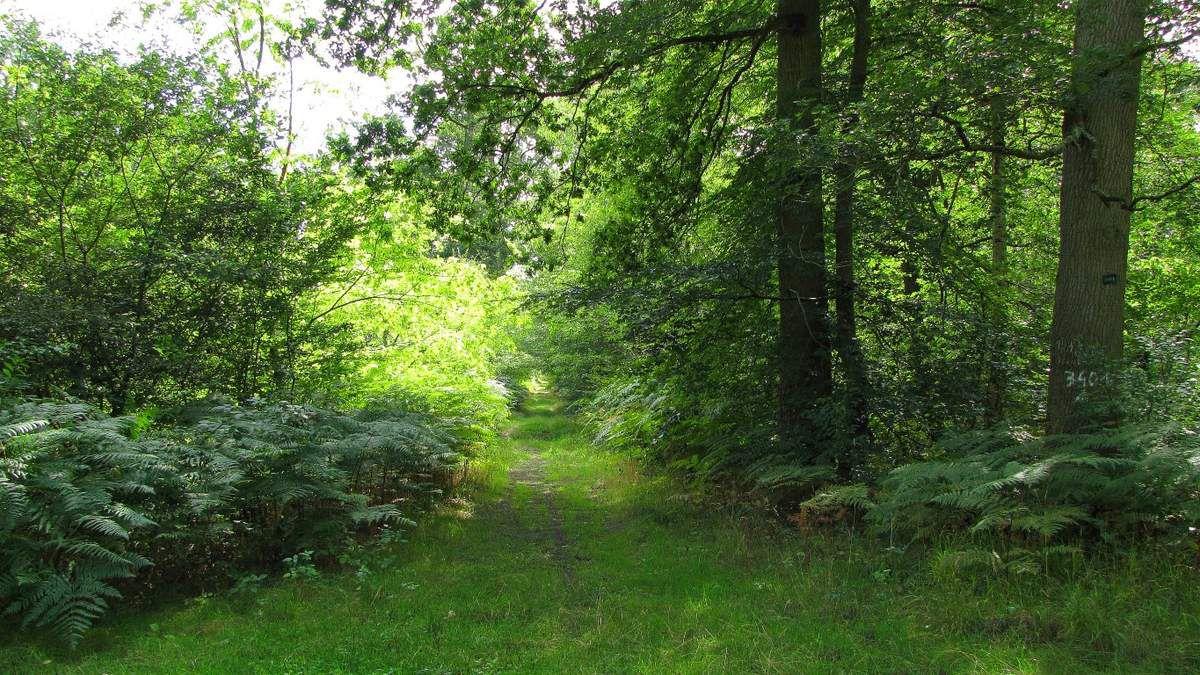 Randonnée en forêt de Compiègne_le Puits d'Antin_les Mares St-Louis_La Muette