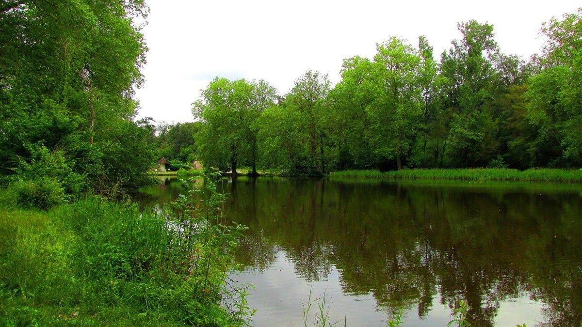Randonnée en forêt de Compiègne_étang de Sainte-Périne_la Michelette