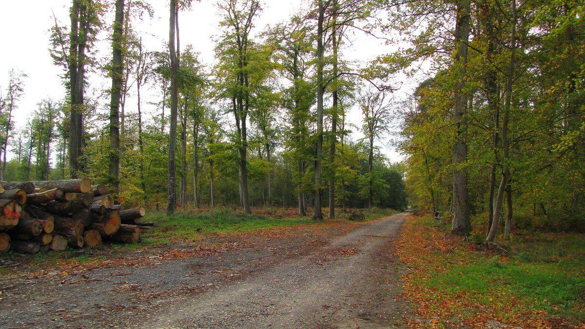 Randonnée en forêt de Compiègne_la Muette_le Mont Arcy_le Fort Poirier