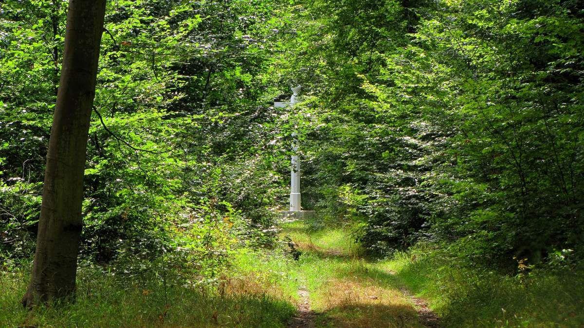 Randonnée en forêt de Compiègne_la Mare aux Canes_la Faisanderie_la Belle Image