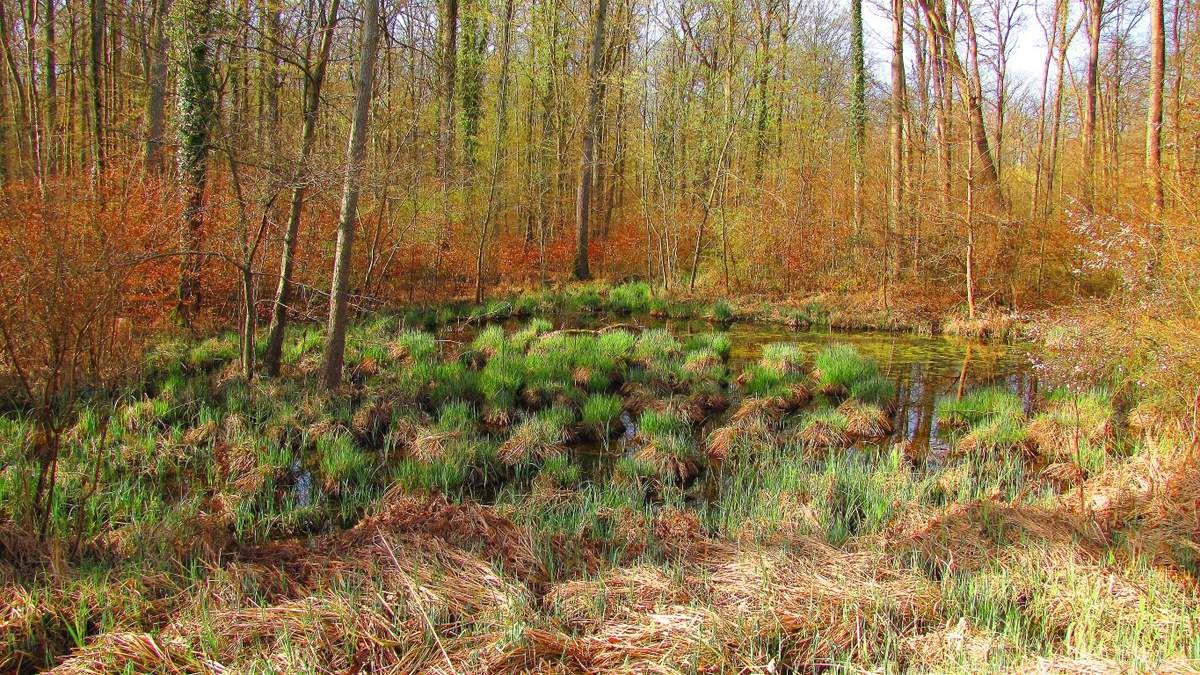 des marécages en forêt de Compiègne
